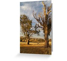Dry and Beautiful in Canberra - Australia Greeting Card
