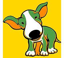 Irish Bull Terrier Puppy  Photographic Print