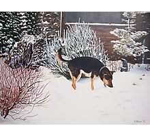 Winter snow scene with cute black and tan dog  Photographic Print