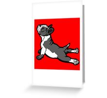 Boston Bull Terrier Puppy Black and White Greeting Card