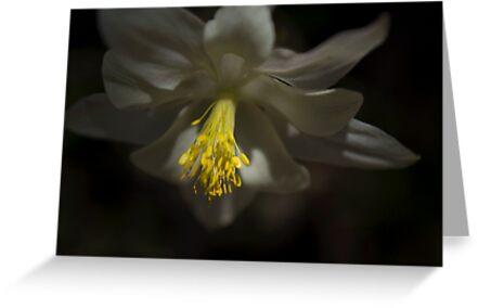 Columbine by Brian Hendricks