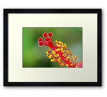 Hibiscus Stem Framed Print