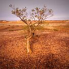 Lone Tree by bettyb