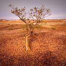 Lone Tree by bettyb