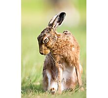 Summer Hare Photographic Print
