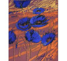 blauer Mohn Photographic Print