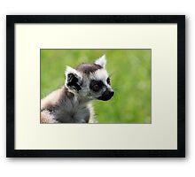 Baby Lemur Framed Print