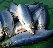 Fresh herring by Weychan