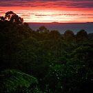 Rainforest Dawn by Paul Moore
