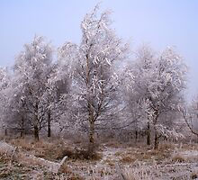 Frosted Trees by OpalFire