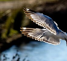 Approaching to land by john  Lenagan