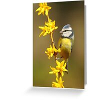 Blue Tit, Yellow Branch Greeting Card