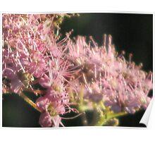 Pink Blurr of Floral Delight Poster