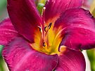 Yet another Day lily by Ray Clarke