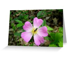 Cherokee Rose with Bee Greeting Card