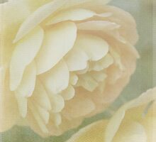 As delicate as a rose can be by Felicitas Molina