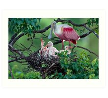 Mother Roseate and her chicks Art Print