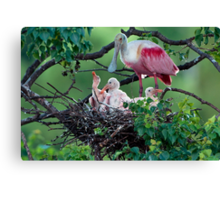 Mother Roseate and her chicks Canvas Print