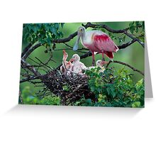 Mother Roseate and her chicks Greeting Card