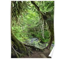 Through the Moss Covered Trees Poster