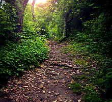 Dirt Path by psnoonan