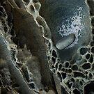 Lorne Rocks-0355 by Albert Sulzer