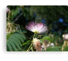 Last Mimosa Standing Canvas Print