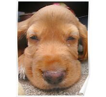 Sleeping Puppy Troy Poster