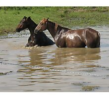 """""""Horses with Attitude no. 6,  """"Ya Gettin' On My Last Nerve!'""""... prints and products Photographic Print"""