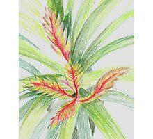 Plant Study Photographic Print