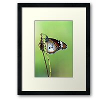 Butterfly on Perch Framed Print