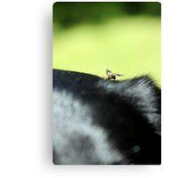 Horse ate the Lab Canvas Print