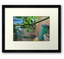 Grape Vine - Rancho Cucamonga Framed Print