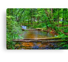 Crystal River-2 Canvas Print