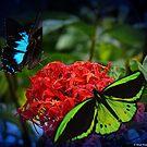 Butterflies by Tanya Rossi