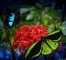 Butterflies by Tanya Rossi