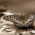 A Changed Butterfly by Nancy  Vice