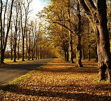 Clumber Park Lime Tree Avenue by saxonfenken