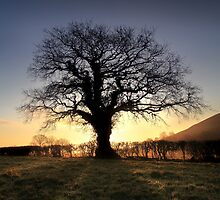Oak Tree Glastonbury Tor by Angus Clyne
