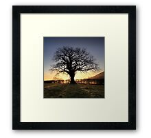 Oak Tree Glastonbury Tor Framed Print