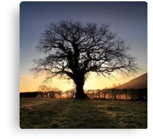 Oak Tree Glastonbury Tor Canvas Print