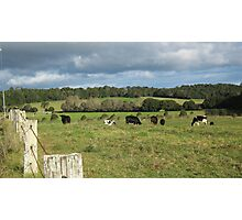 A Serene Country Landscape. Photographic Print