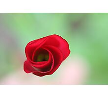 The end of a great artwork - red whirlwind in a green paradise Photographic Print