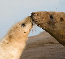 A Kiss From A Nose by Robert Taylor