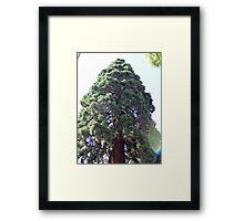 Huge Tree Framed Print