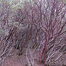 manzanita mosh-up by Bruce  Dickson