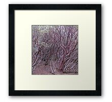 manzanita mosh-up Framed Print