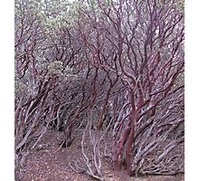 manzanita mosh-up Photographic Print