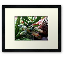 ©NS Green Dreams VIA Framed Print
