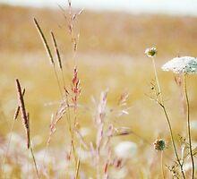summer grass 19 by vigor